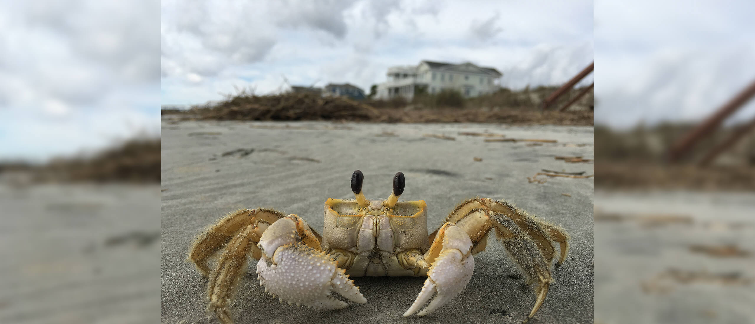 Ghost Crab, Isle of Palms, SC - James Kobierowski